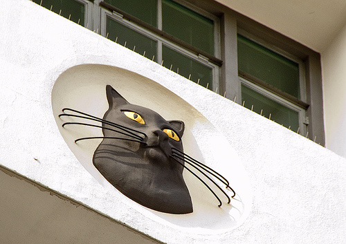 Cat Roundel Close-Up