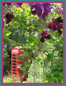 Telephone Kiosk and Clematis
