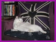 Tinkerbelle on Cushions