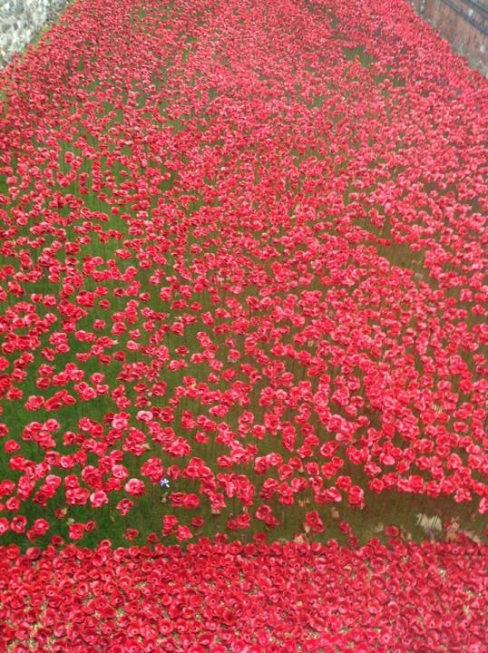 Fran - Sea of Poppies