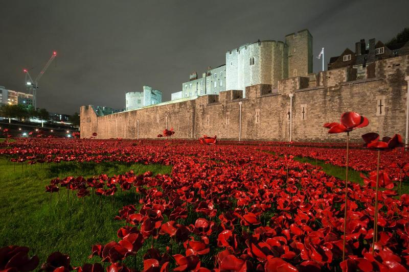 Spectacular night view of the poppies