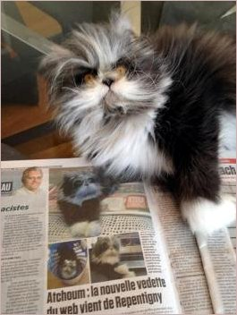 Atchoum and newspaper article