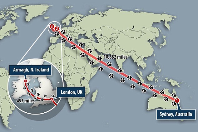 Have cat will travel cat map huge trek the feline whose real name is tigger travelled more than 10550 miles from sydney australia to london before somehow taking off gumiabroncs Images