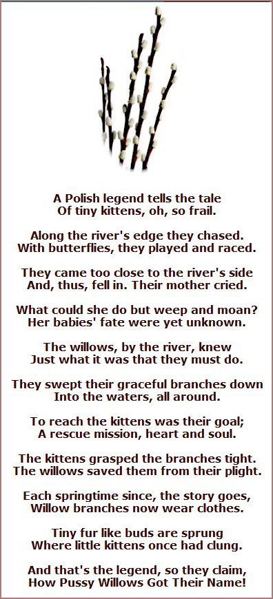 Pussy Willow Poem