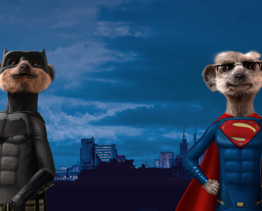 Super and Bat Meerkats