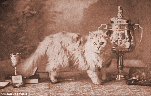 Fulmer Zaida, an early champion cat
