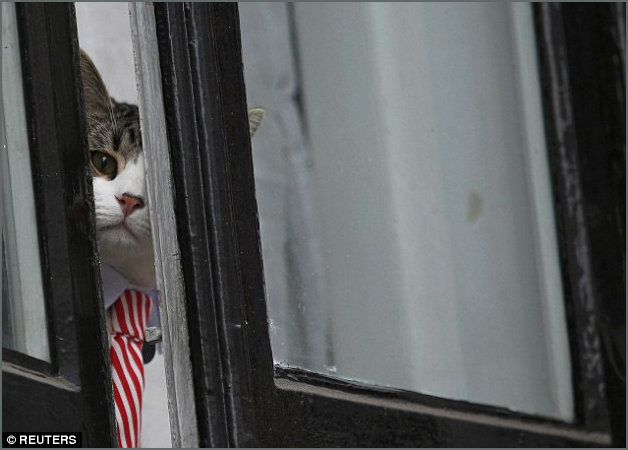 Assange Cat peekaboo