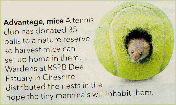 Field Mouse and Tennis Ball