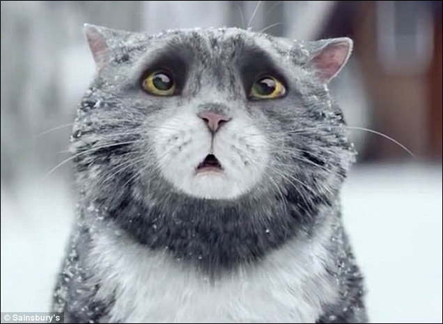 Mog the calamity-prone cat in a brand-new Christmas tv ad