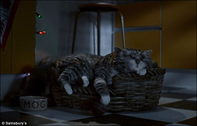 Mog has a nightmare while asleep in the kitchen