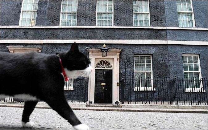 Palmerston no. 11 cat on the prowl