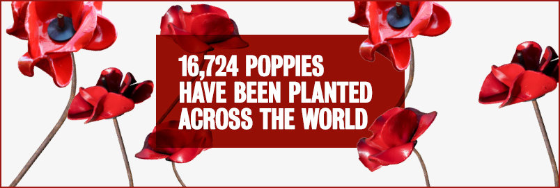 16724 k poppies around the world