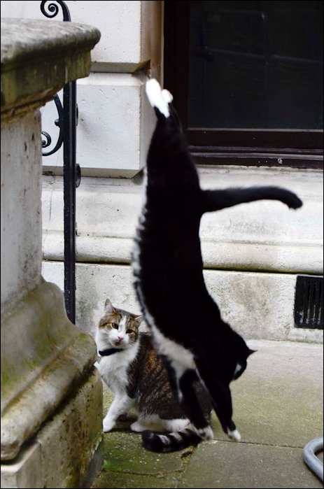 Cat Fight in Downing Street