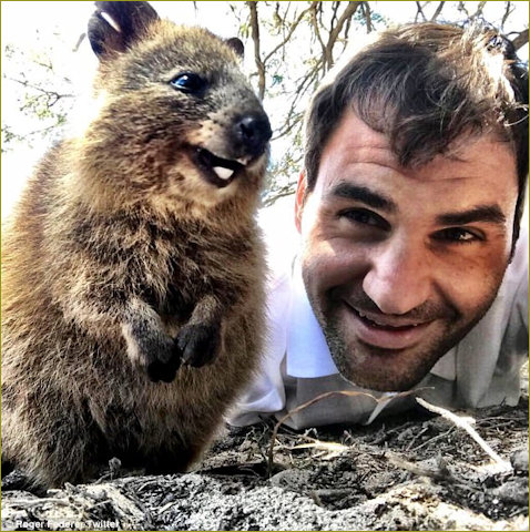 Roger Federed selfie with obliging quokka