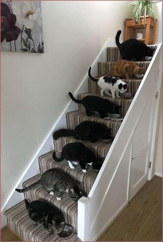 8 Cats Feeding on the Stairs