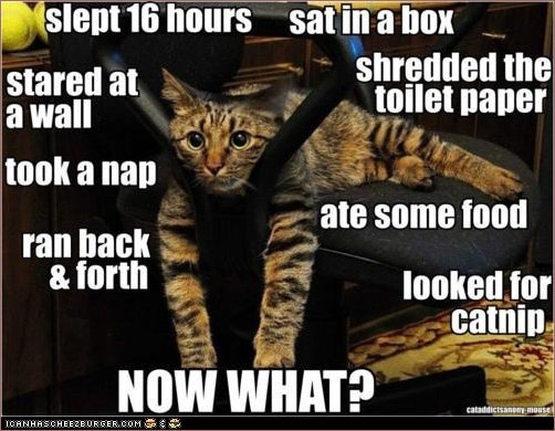 A day in the life of a cat - now what?