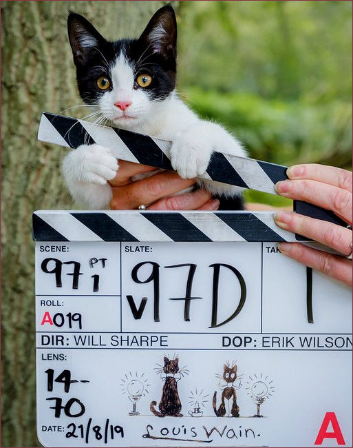 Cat Board snnouncing new Wain biopic