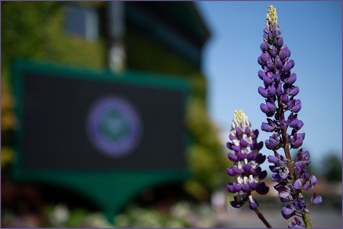 Official announcement of the cancellation of Wimbledon 2020